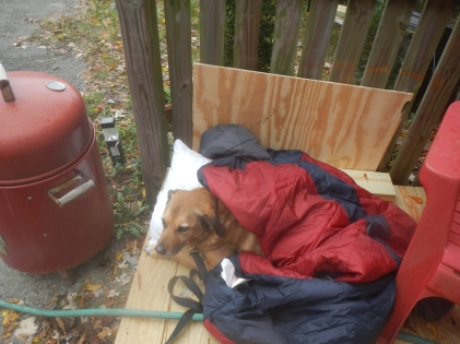 My brewing assistant was showing signs of being cold, so I laid her sleeping bag on top. (red and blue sleeping bag on top of dog).